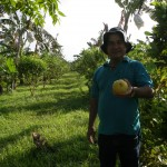 Fruit picking (Citron)