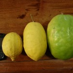 Lemons & a Blackberry